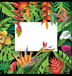 Frame from tropical plants and flowers vector
