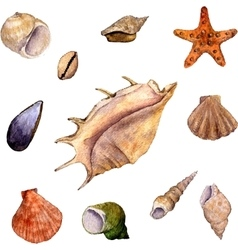 set of watercolor drawing shells vector image