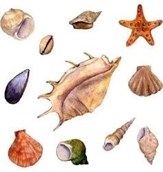 Set of watercolor drawing shells vector