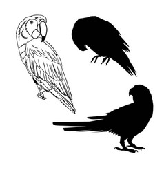 with parrot silhouettes collection isolated on vector image