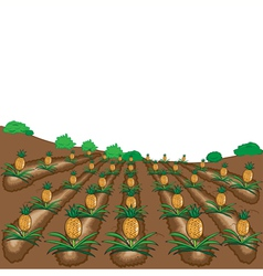 pineapples fruit cartoon vector image