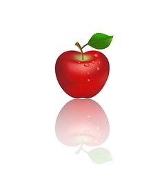 Red apple on white background vector