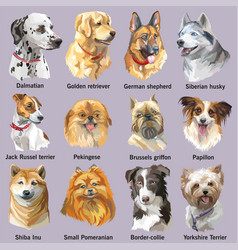 Set of portraits of dog breeds vector