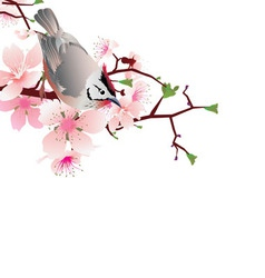 bird jn white vector image