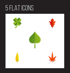 Flat icon foliage set of frond hickory aspen and vector