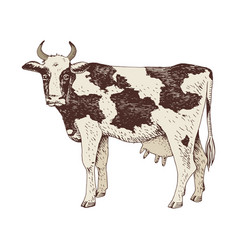 Hand drawn cow farm animal vector