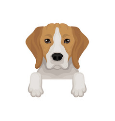 Lovely beagle dog peeking out from border cute vector