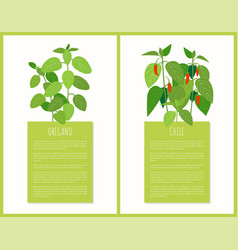 Oregano and chile plants isolated cards vector