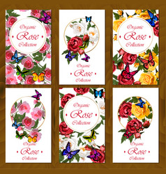 rose card on wooden background vector image