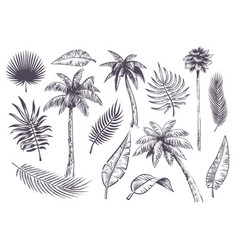 sketch palm trees and leaves hand drawn vector image