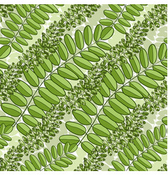 green seamless pattern with acacia leaves spring vector image vector image