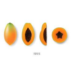 Papaya collection vector