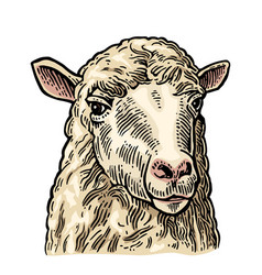 sheep head hand drawn in a graphic style vintage vector image vector image
