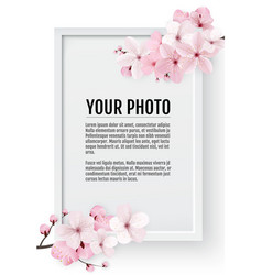 cherry blossom sakura branch with pink flowers on vector image