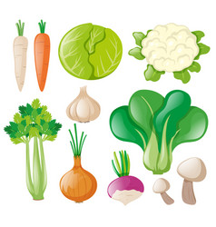 Different types of fresh vegetables vector