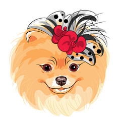 Fashion dog pomeranian breed smiling vector
