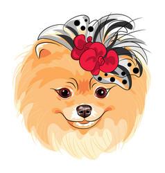 Fashion dog pomeranian breed smiling vector