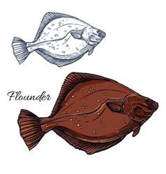 flounder fish ocean flatfish isolated sketch vector image