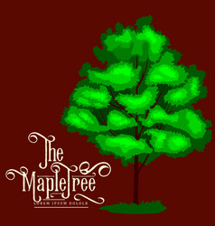 Cartoon isolated maple summer tree on a white vector