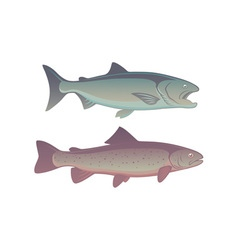 fish salmon vector image vector image
