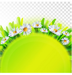 green nature background with chamomile vector image vector image
