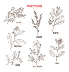 Best antiseptic herbs set vector
