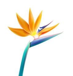 bird of paradise flower vector image
