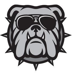 Bulldog head with aviator sunglasses vector