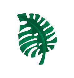 Green split leaf philodendron vector