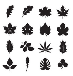 Leaf icons isolated on a white background vector