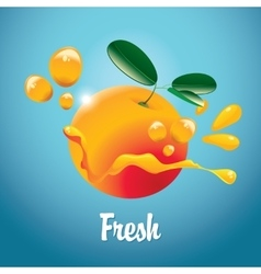 Orange fruit and juice splash vector