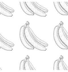 bananas hand drawn black and white sketch as vector image