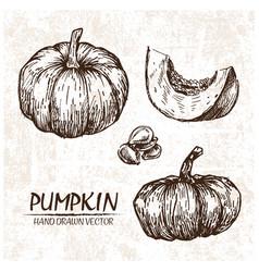 Digital detailed pumpkin hand drawn vector