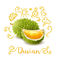 Exotic fruit durian doodles composition vector