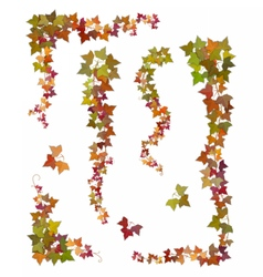 Hanging branches of autumn ivy vector