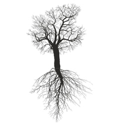 Mulberry tree without leaves with root vector