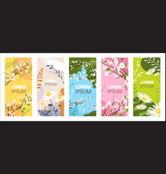 set beautiful flowers and leaves floral spring vector image