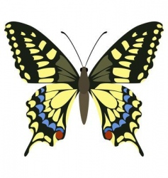 papilio machaon vector image vector image