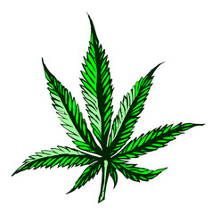 green cannabis leaf on white background vector image