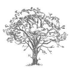 Freehand drawing tree vector