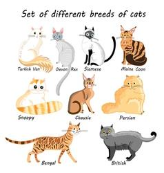 Set cat breeds vector