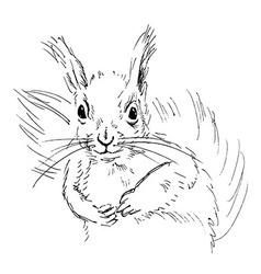 Hand sketch squirrel vector image