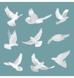 Set white doves peace isolated on background vector image
