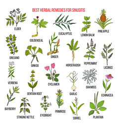 Best herbal remedies for sinusitis vector