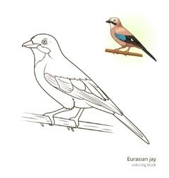 Eurasian jay bird coloring book vector