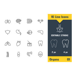 human organs structure anatomy thin line icon vector image