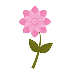 pink flower stem leaves vector image