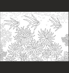 Tropical fishes and anemones vector