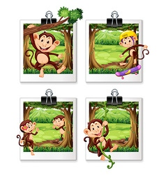 Four frames of monkey in the jungle vector image vector image