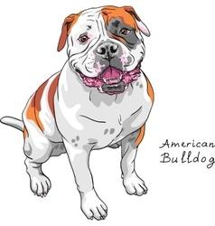 Sketch dog american bulldog breed vector